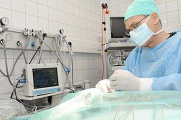 operation af Blodøre / Othæmatom hos hund