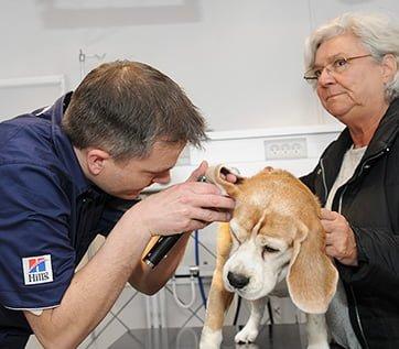 Sundhedsundersøgelse af hund