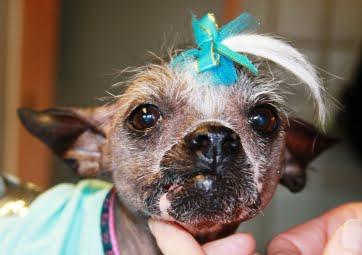 Hunde og katte får sikker narcose på Vejle Dyrehospital og Dyreklinik