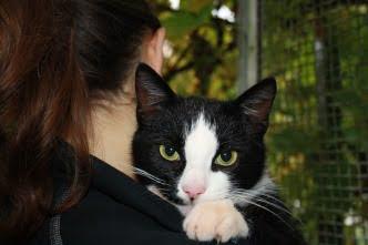 Katte på Vejle Dyrehospital og dyreklinik
