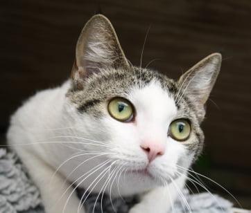 En sød kat vi fik ind fra Løsning. Den skulle steriliseres.