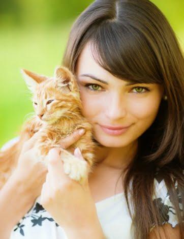 Katte gode links Vejle Dyrehospital